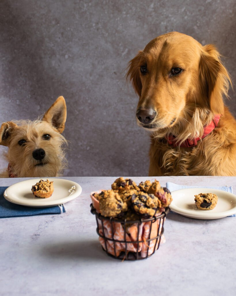 Blueberry Pup-Muffins   Blue Jean Chef